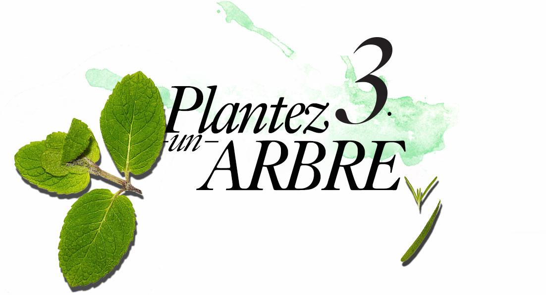 3. Planter un arbre
